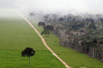 Soy fields cut into the Amazon rainforest of Brazil. Credit: Ricardo Beliel/Brazil Photos/LightRocket via Getty Images