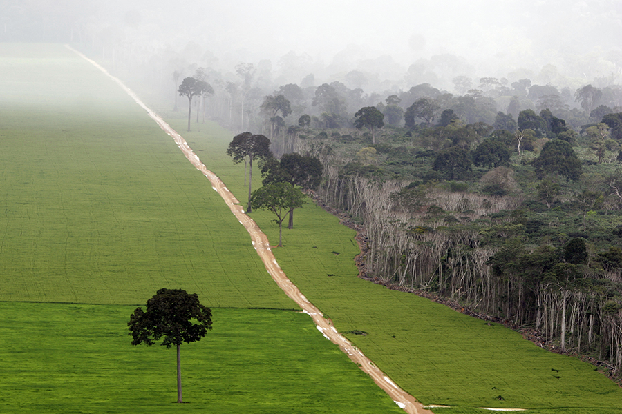 Soy fields cut into the Amazon rainforest of Brazil. Credit: Ricardo Beliel/Brazil Photos/LightRocket via Getty Images