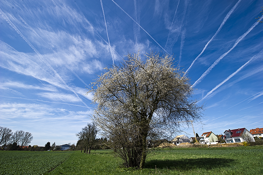 Contrails in the sky over Germany. Credit: Nicolas Armer/AFP/Getty Images