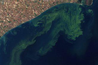Algae blooms in Lake Erie in 2011. Credit: NASA