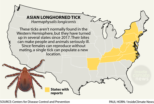 Infographic: Asian Longhorned Tick