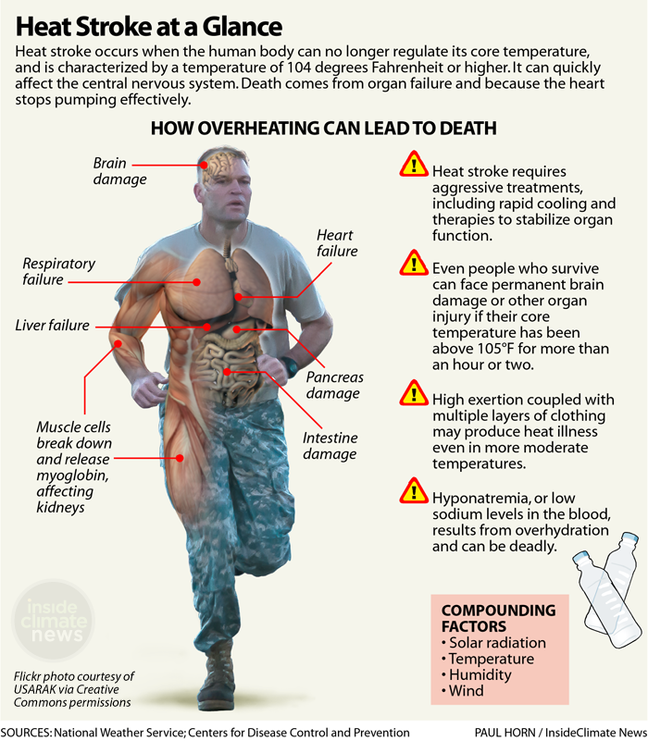 Infographic: What Heat Stroke Does to the Human Body