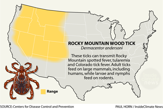 Infographic: Rocky Mountain Wood Tick: Its Range, Diseases and Behavior