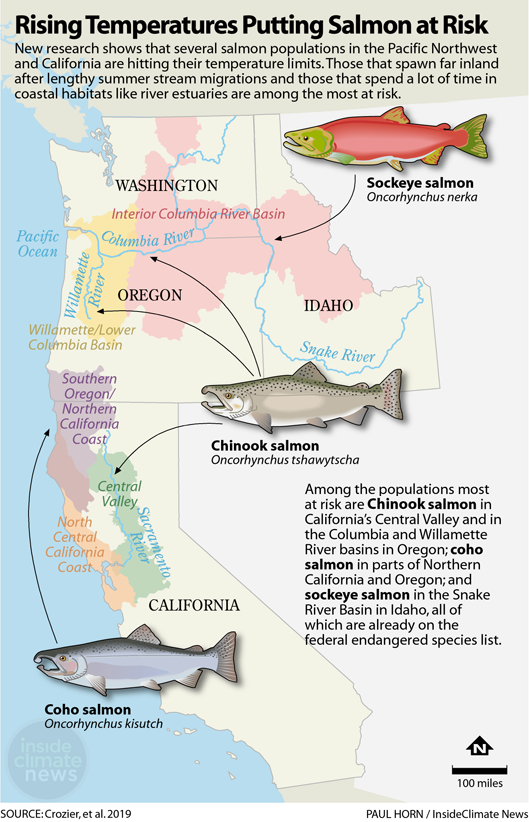 Infographic: Rising Temperatures Putting Salmon at Risk