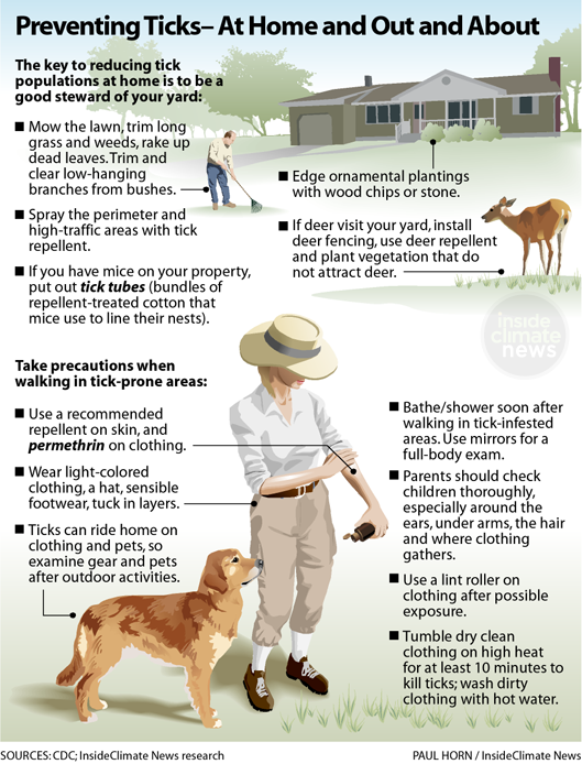 Preventing Tick Bites — at Home and in the Woods