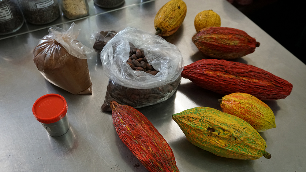Cacao pods on a table a the Honduran Agricultural Research Foundation near San Pedro Sula. Credit: Georgina Gustin/InsideClimate News