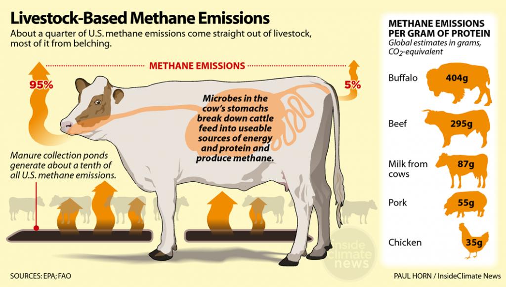 Infographic: Livestock produce large amounts of methane gas