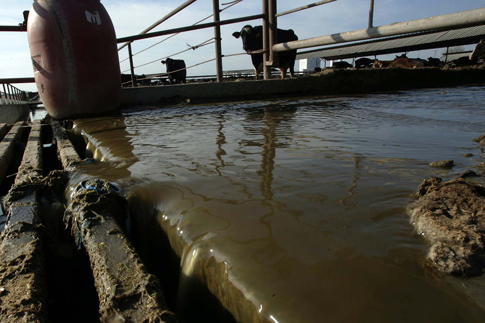 Water washes waste down concrete alley on a farm near Merced that uses a biogas digester system to generate methane gas for electricity. Credit: Bob Chamberlin/Los Angeles Times via Getty Images