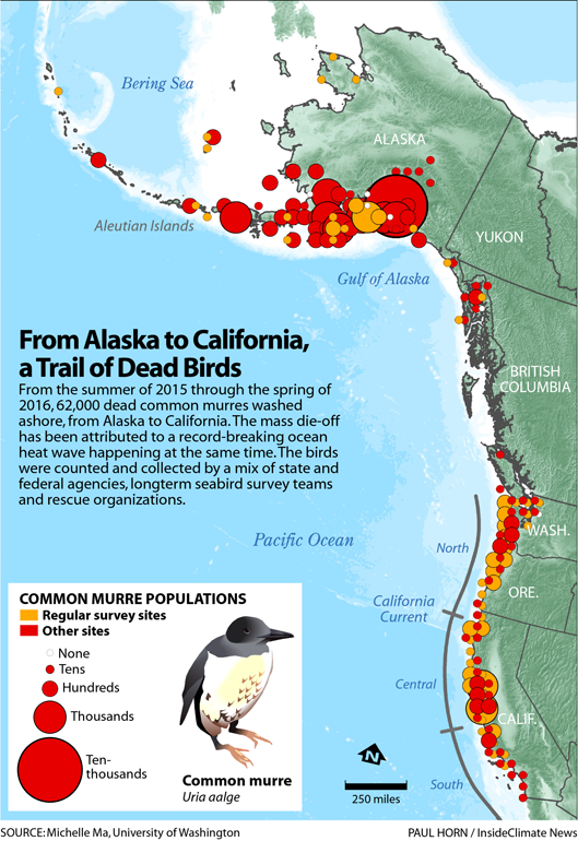 Infographic: From Alaska to California, a Trail of Dead Birds