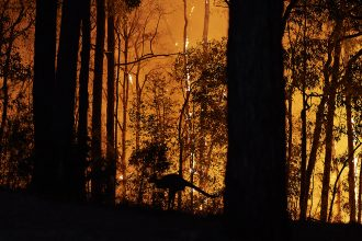 Bushfires have burned more than 12 million acres across Australia over the past three months and killed hundreds of millions of animals, including koalas and kangaroos. Credit: Brett Hemmings/Getty Images