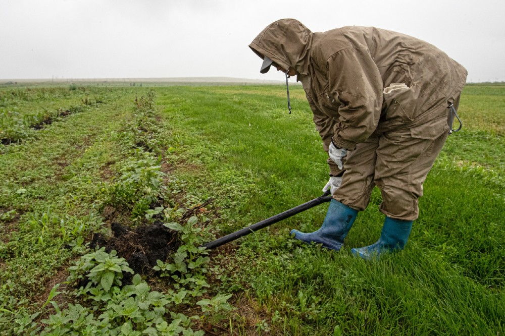 Farm in Russia. Credit: Stanislav KrasilnikovTASS via Getty Images
