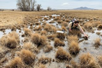 Keith Lawrence, a biologist with the Utah Division of Wildlife who tracks Columbia spotted frogs each spring, reaches for a mass of spotted frog eggs.