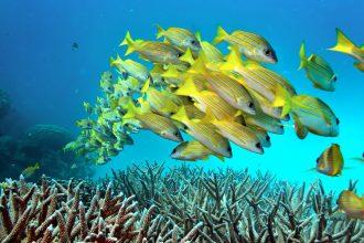 Great Barrier Reef. Credit: Rick Loomis/Los Angeles Times via Getty Images