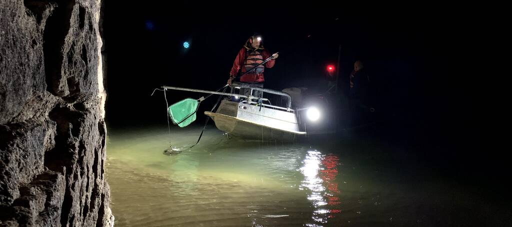 Clay Nelson is using a floodlight to find stunned fish and retrieve them at a sampling site on the main Colorado downstream from the Little Colorado River. Scientific findings are being used to help guide Colorado River operations. Credit: Judy Fahys