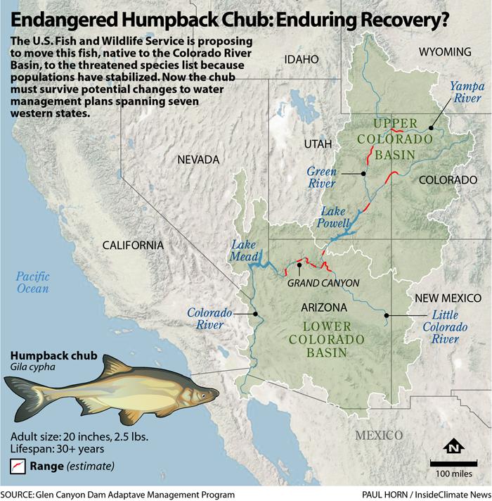 Endangered Humpback Chub: Enduring Recovery?