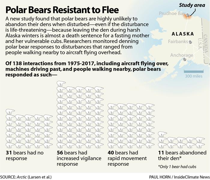 Polar Bears Resistant to Flee