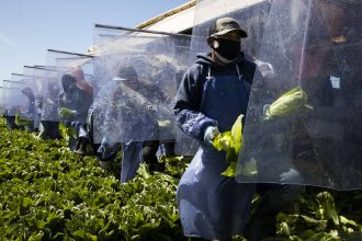 Farm laborers harvest romaine lettuce on a machine with heavy plastic dividers that separate workers from each other on April 27, 2020 in Greenfield, California. Credit: Brent Stirton/Getty Images