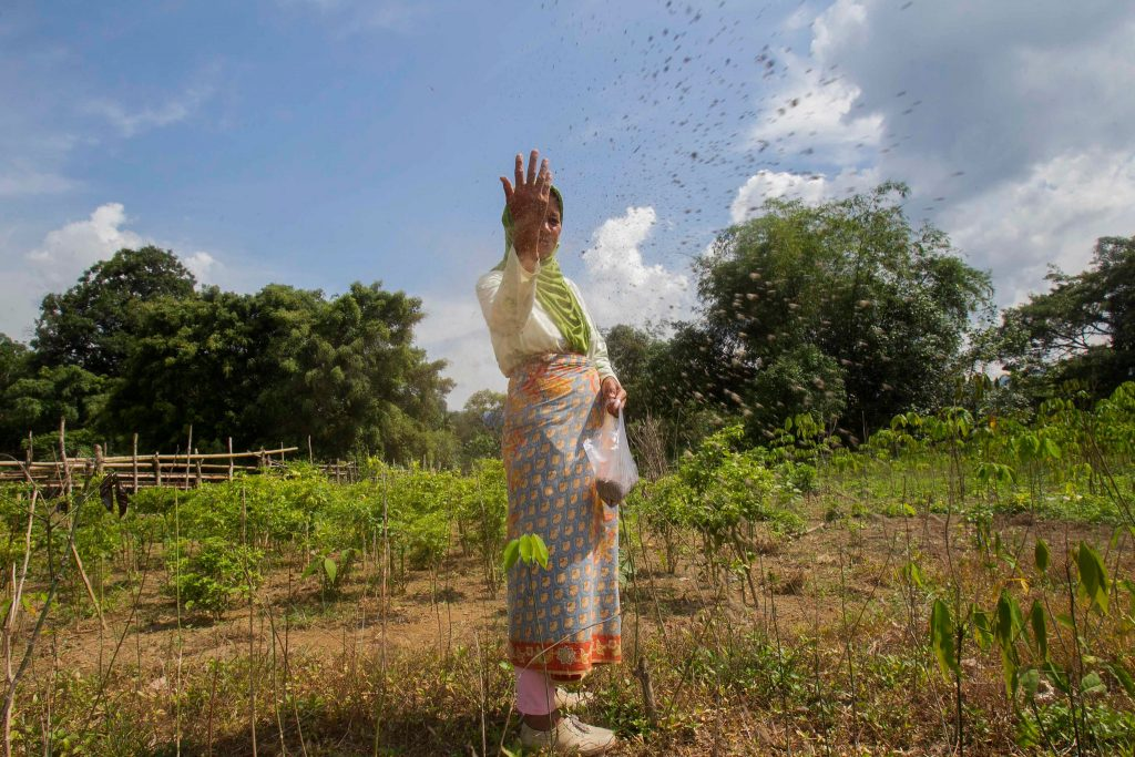 "An Indonesian farmer spreads organic fertilizer on her crops, which are interspersed with trees. ""Agroforestry"" practices improve soil fertility and water storage and infiltration in croplands. Credit: Tri Saputro/CIFOR"