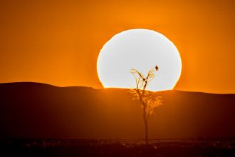A dead acacia tree trunk is silhouetted against the setting sun in the Deadvlei salt pan in Namib-Naukluft National Park, located in Namibia, Africa. Credit: VW Pics/Universal Images Group via Getty Images