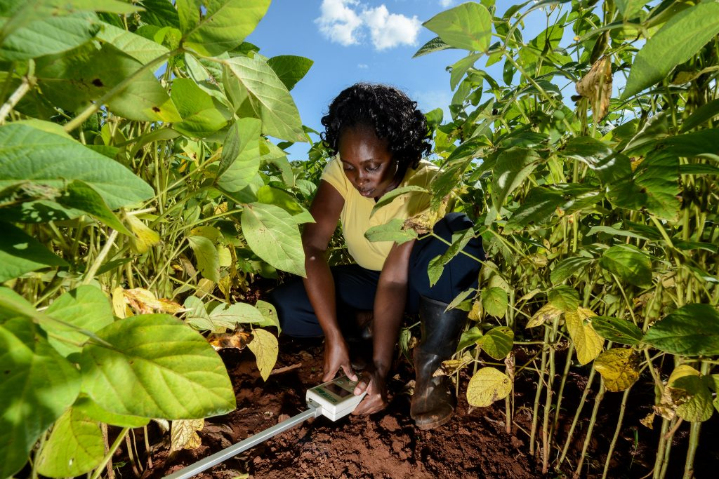 "A researcher with the International Center for Tropical Agriculture studies ""climate-smart"" soils in Kenya. Limiting tilling helps improve soil fertility and sequester carbon. Credit: Georgina Smith/CIAT"