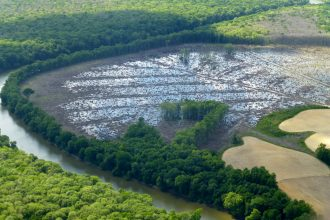 Little remains but stumps and puddles in what was once a bottomland hardwood forest on the banks of the Roanoke River in northeastern North Carolina. Credit: Joby Warrick/The Washington Post via Getty Images