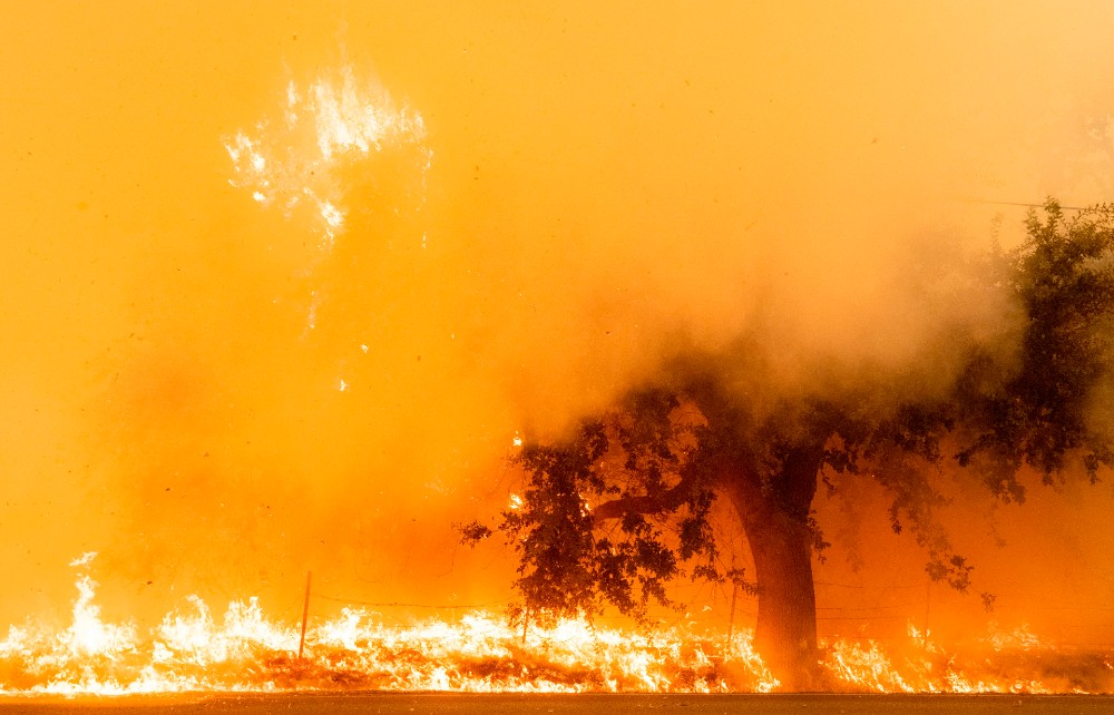 Flames and smoke overtake a tree as the LNU Lightning Complex fire continues to spread in Fairfield, California on August 19, 2020.