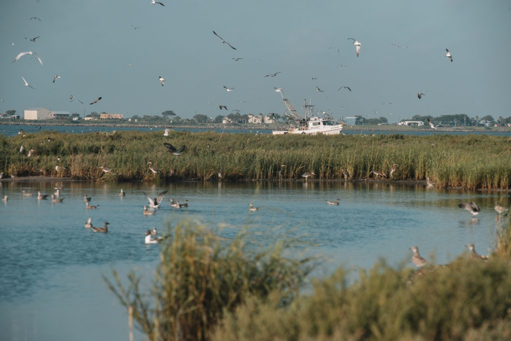 Birds nest on an island in Lavaca Bay, close to Dredge Island and its mercury contamination. Credit: Spike Johnson