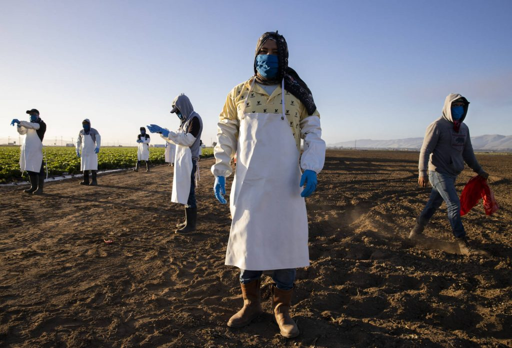 Farm laborers from Fresh Harvest arrive early in the morning to begin harvesting on April 28, 2020 in Greenfield, California. Credit: Brent Stirton/Getty Images