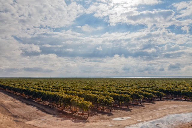 Grapes growing in vineyard near Delano in Kern County, California. Credit: Citizens of the Planet/Education Images/Universal Images Group via Getty Images