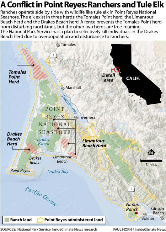 A Conflict in Point Reyes: Ranchers and Tule Elk