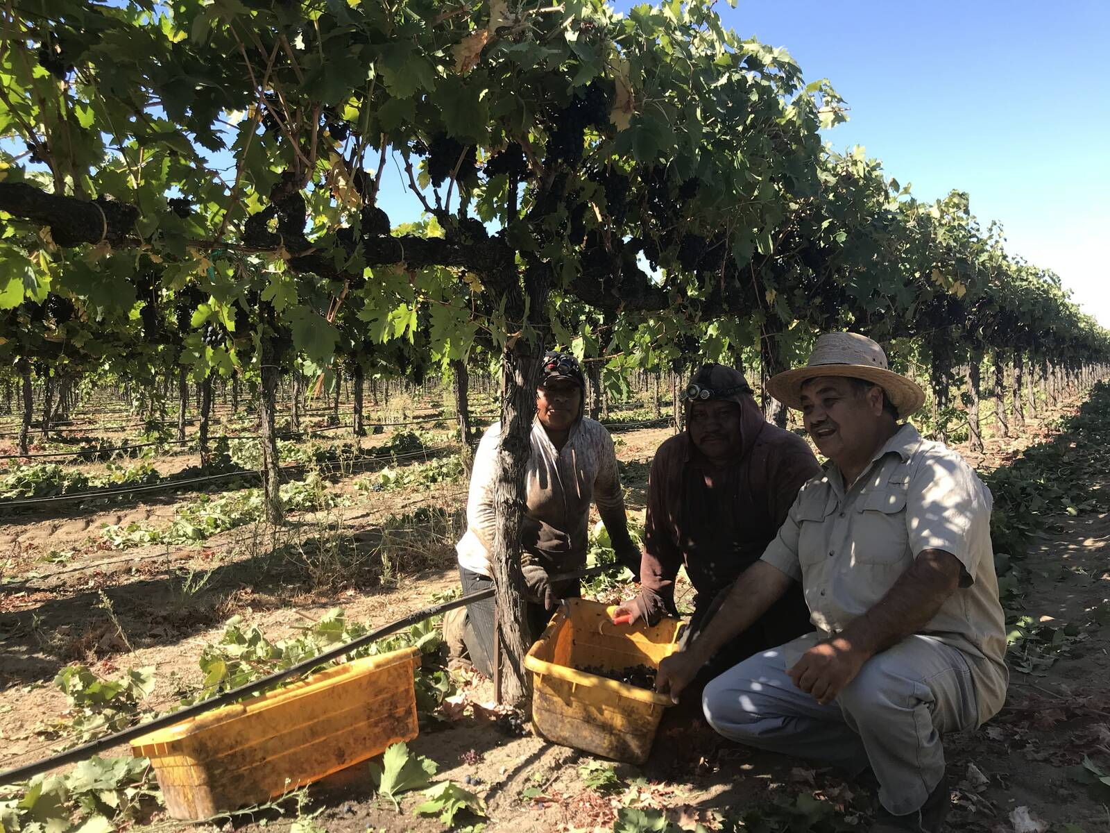 Luis Magaña, a long-time advocate for farmworkers' justice, spends much of his time doing outreach in the fields of the San Joaquin Valley. Courtesy of Luis Magaña
