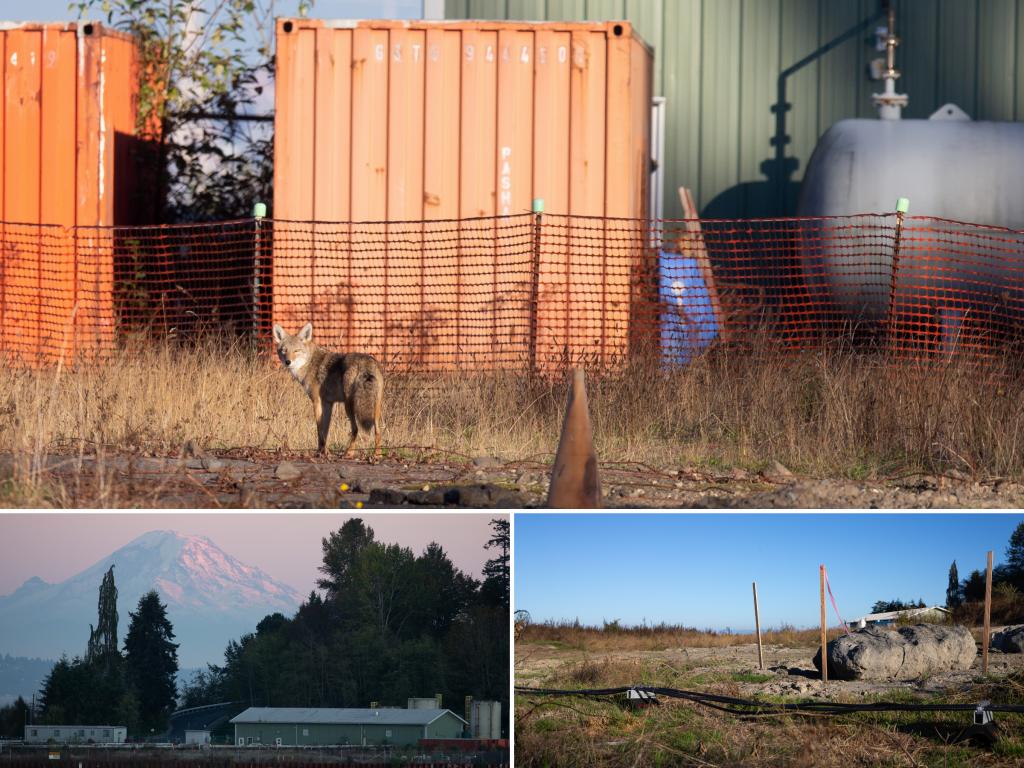 Wyckoff/Eagle Harbor Superfund site. Credit: Karen Ducey