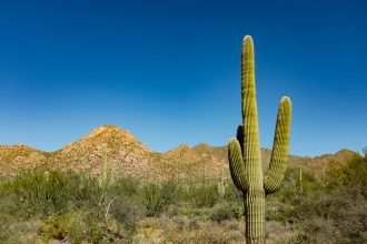 A saguaro cactus is seen against the blue sky in Saguaro National Park, Arizona. Despite rich solar resources, Arizona's policies have often been unfriendly to solar power. But that's changing with the adoption of a statewide plan to get to 100 percent ca