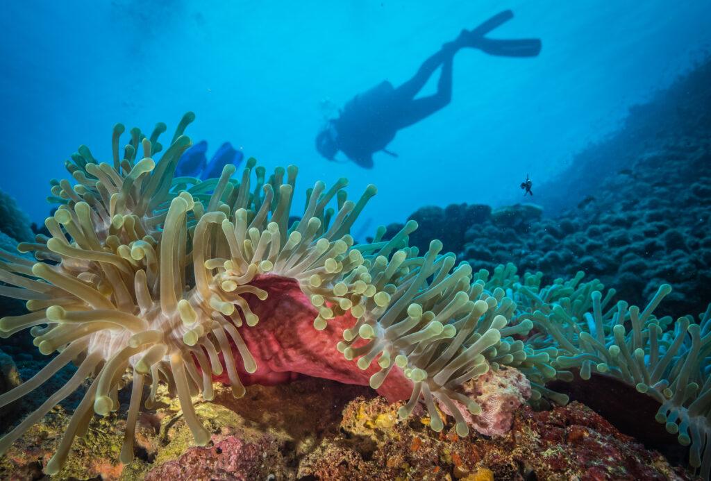 A coral reef off the shore of Tanzania. Credit: Michael Markovina