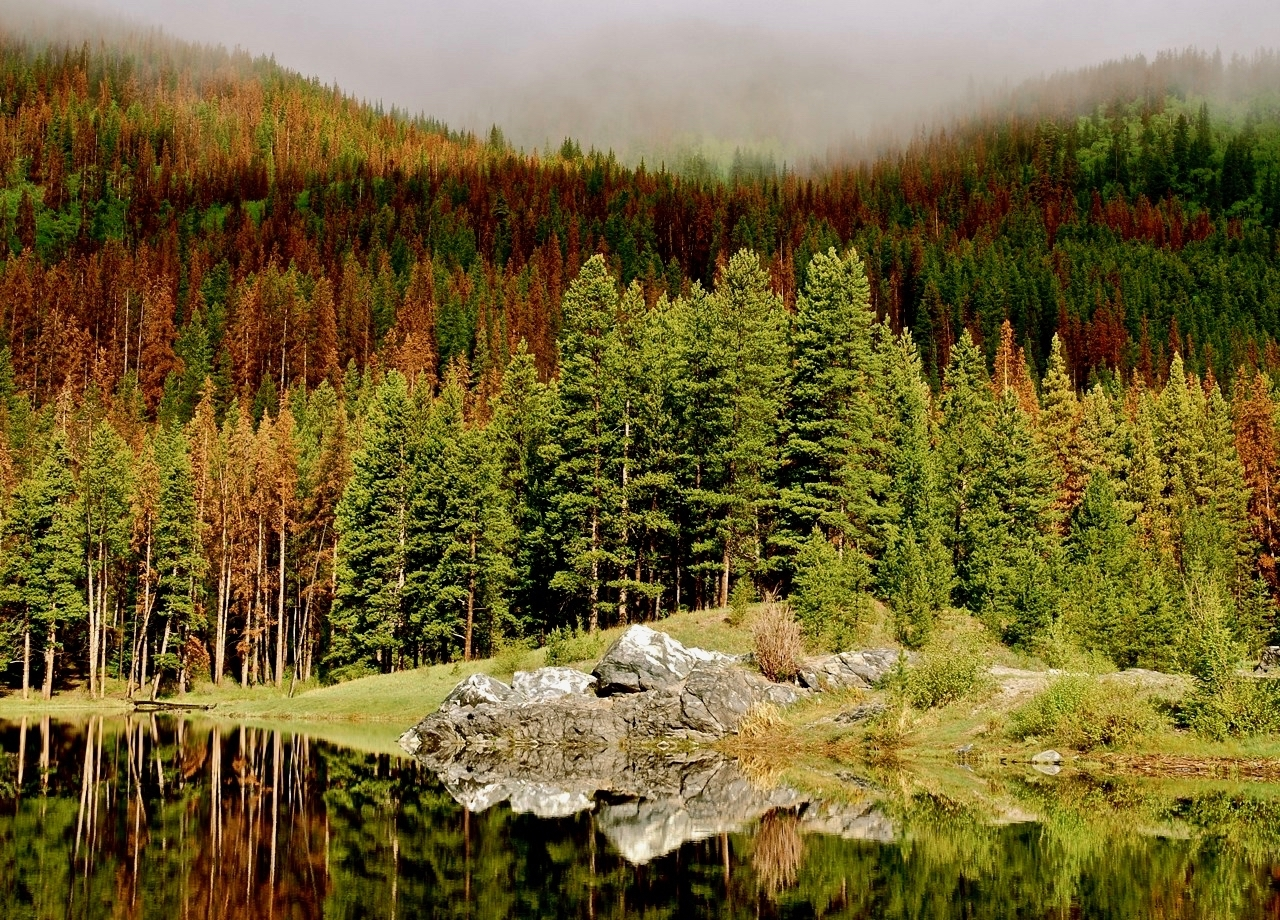 As the climate in the Rocky Mountains warmed at about double the average global rate in recent decades, rapidly spreading bark beetle outbreaks left millions of trees red and dead, part of an intensifying cycle of global warming impacts that decreases the amount of carbon dioxide forests can take out of the atmosphere. Credit: Bob Berwyn