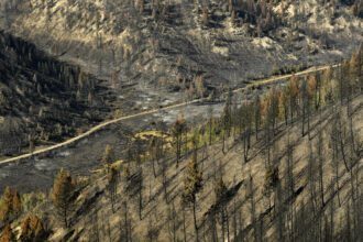 Devastation is seen after the Pine Gulch Fire on Aug. 27, 2020 near De Beque, Colorado. Credit: Helen H. Richardson/MediaNews Group/The Denver Post via Getty Images