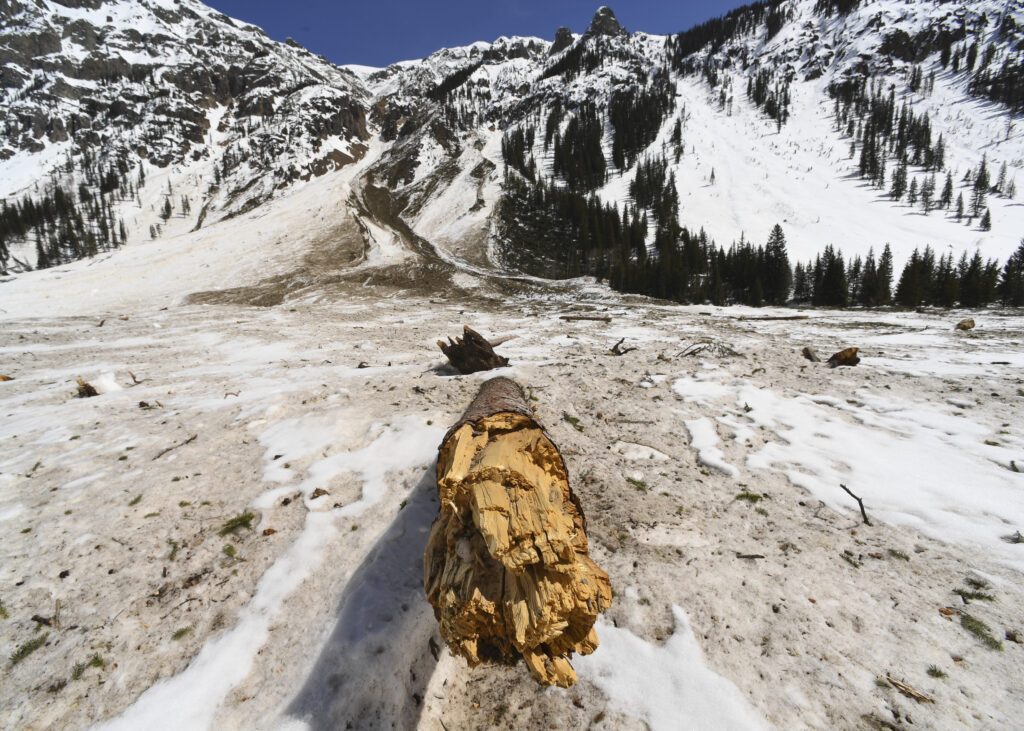 A pine tree is snapped in half during an avalanche on March 28, 2019 in Silverton, Colorado. Credit: RJ Sangosti/MediaNews Group/The Denver Post via Getty Images