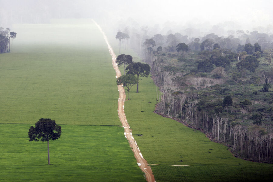 A soy plantation in the Amazon rainforest near Santarém in the state of Pará, Brazil, on May 13, 2006. Credit: Ricardo Beliel/Brazil Photos/LightRocket via Getty Images