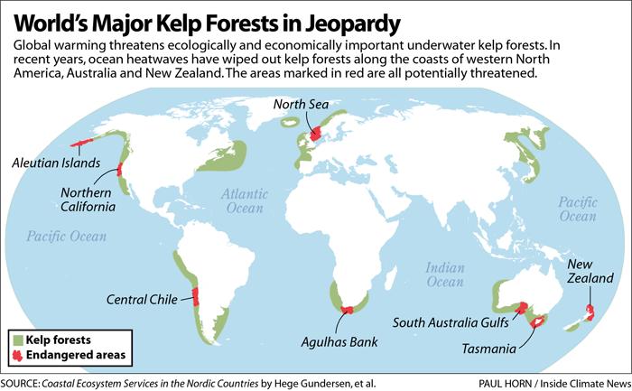 World's Major Kelp Forests in Jeopardy
