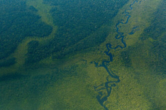 The Amazon Rainforest. Credit: Diego Baravelli/picture alliance via Getty Images