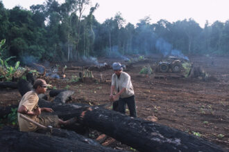 Farm workers cut a tree in the Cardamom Mountain rainforest in Cambodia in 2002. Credit: Peter Charlesworth/LightRocket via Getty Images