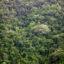 The rainforest in North Queensland, Australia. Credit: Tim Graham/Getty Images