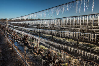 A severe hard freeze in California's Wine Country caused vineyard managers to launch frost protection measures to protect the budding grapevines on January 21, 2018 in Los Alamos, California. Credit: George Rose/Getty Images