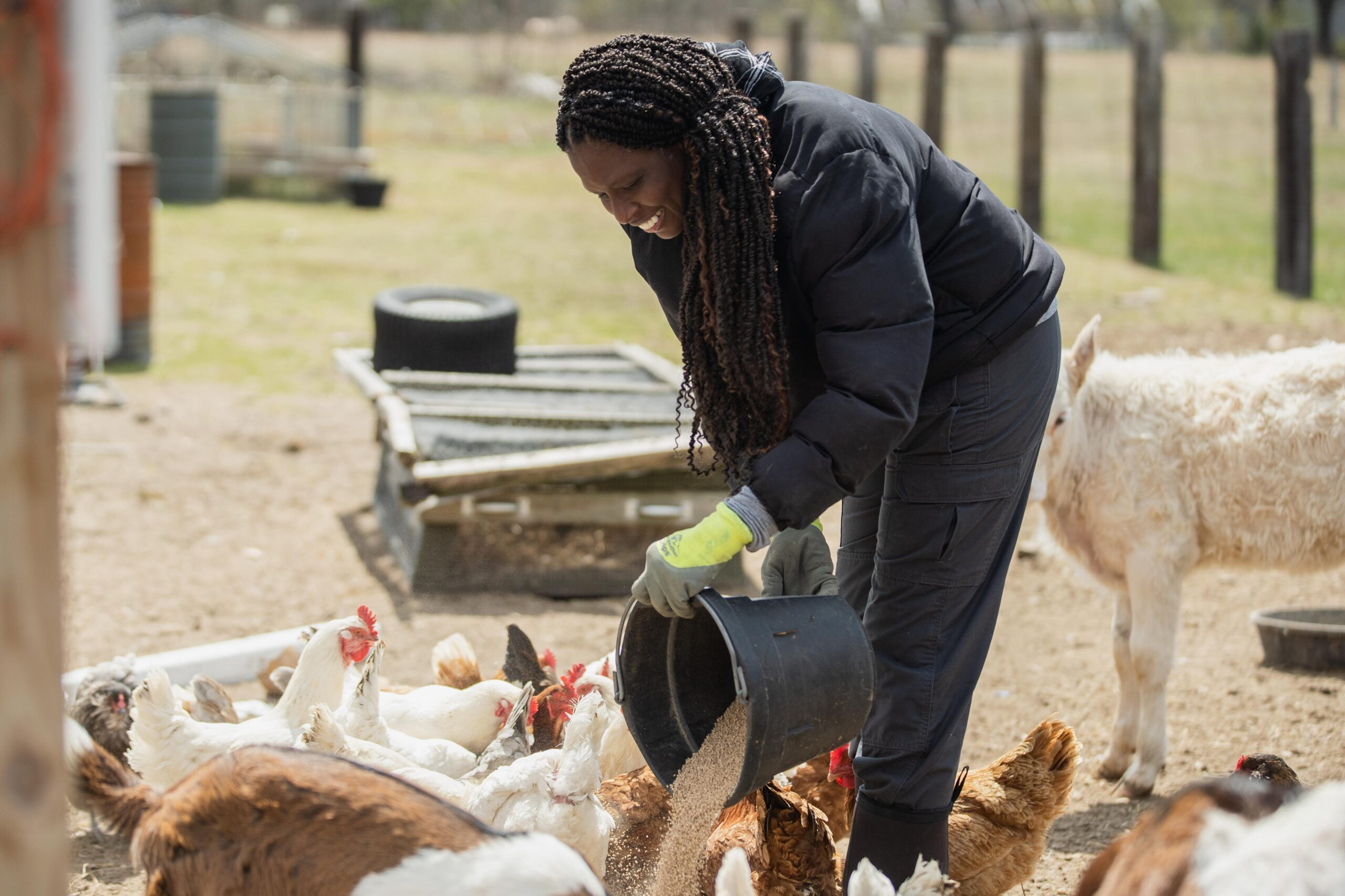 Johari Cole-Kweli feeds her chickens on her farm, Iyabo Farms, in Pembroke Township, Illinois on April 21, 2021. Credit: Pat Nabong/Sun-Times