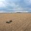 Dan Duffy plants soybeans on April 23, 2020 near Dwight, Illinois. Credit: Scott Olson/Getty Images