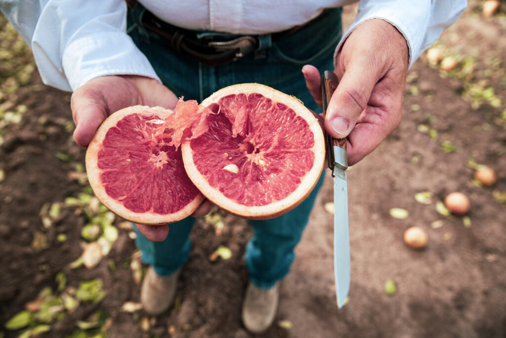 President of Texas Citrus Mutual Dale Murden slices into a fruit affected by the February freeze on his orchard between Santa Rose and Combes, Texas. Credit: Jason Garza