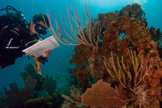 A scientist studying coral reefs in Virgin Islands National Park. Credit: NPS Climate Change Response
