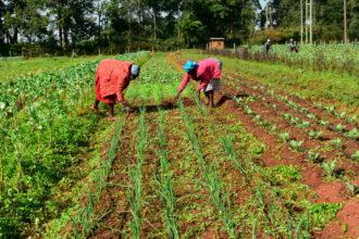 Farmers in Kenya. Credit: Geoffrey Omondi/Climate Visuals Countdown