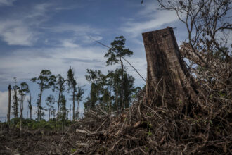 Land clearing of peatland forest to make way for a palm oil plantation in Aceh province, Indonesia, the habitat of the Sumatran orangutan, on November 1,3, 2016. The orangutans in Indonesia have been on the verge of extinction as a result of deforestation and poaching. Credit: Ulet Ifansasti/Getty Images