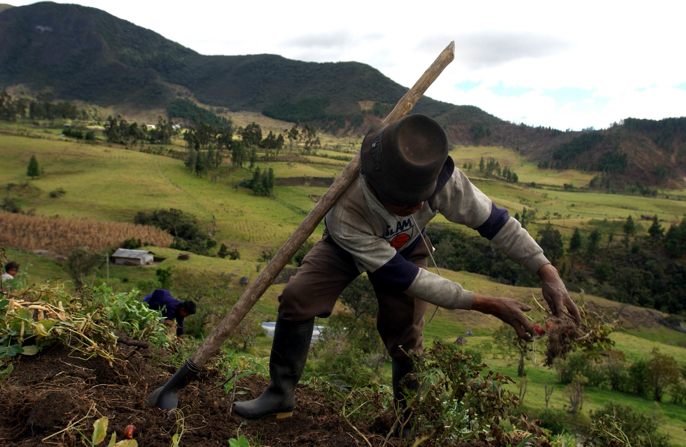 A Guambiano man harvests potatoes in the mountains outside Silvia, Cauca, Columbia. Credit: Ann Johansson/Corbis via Getty Images